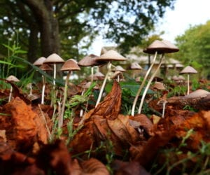 What are Magic Mushrooms?